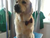 Dog Training Tips - How To Train a Dog